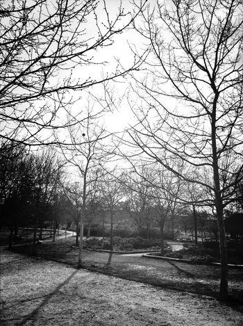 Blackandwhite Trees The Minimals (less Edit Juxt Photography)