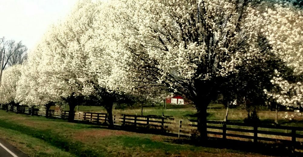 Taking Photos Relaxing Enjoying Life Snmsouthernlove Dogwood Blossom Life Nature Photography Nature Lover Nature How Do You See Climate Change? taken in new market AL Showcase: November Prespective The Great Outdoors - 2017 EyeEm Awards