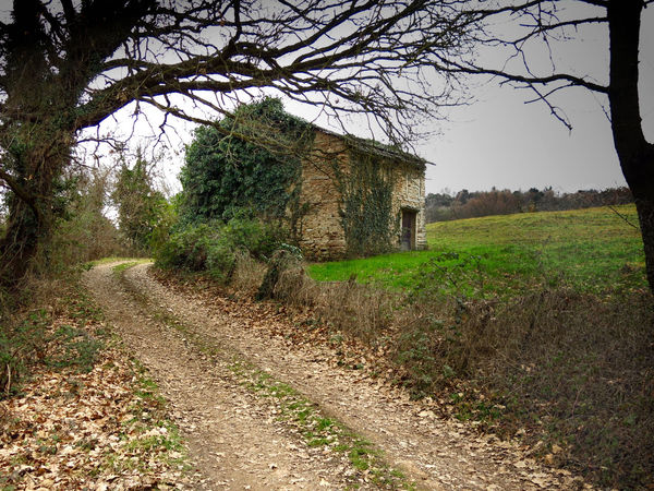 Abandoned House Footpath Ivy Covered Mistery No People Outdoors Past Life Rural Scene Solitary Place The Way Forward