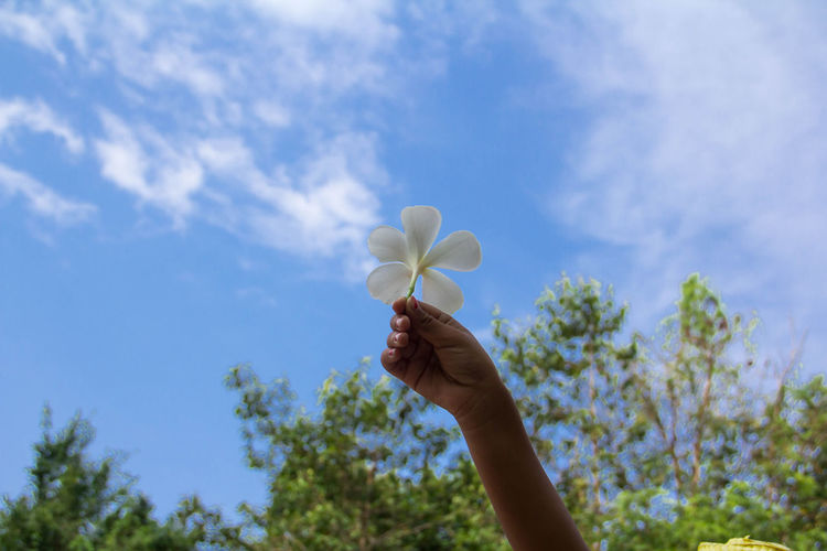 Cropped hand of woman holding white flower against blue sky