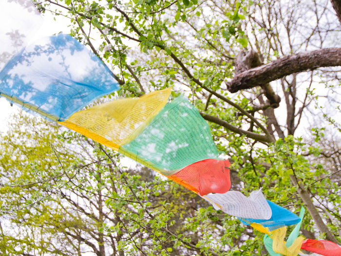 Low angle view of umbrellas hanging on tree against sky