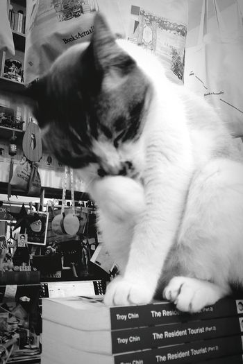 Cat Bookshop Grooming Animal Tiong Bahru Singapore Bnw_sg Bnw_city Bnwsingapore Bnw_collection Bnwphotography