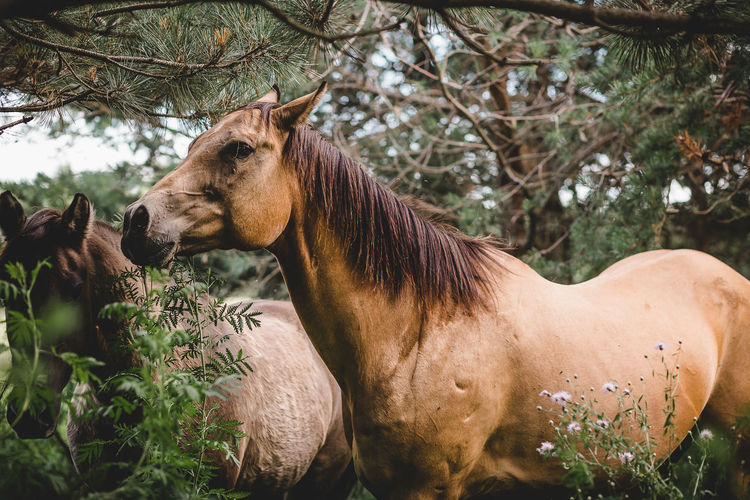 View of a horse on tree