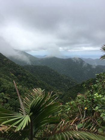 Dominica Beauty In Nature Day Green Color Growth Landscape Mountain Nature No People Outdoors Plant Scenics Sky Tranquil Scene Tranquility Tree