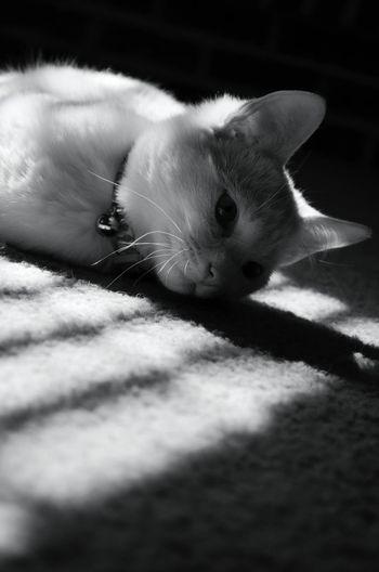 Relaxing Cat Black & White Natural Light