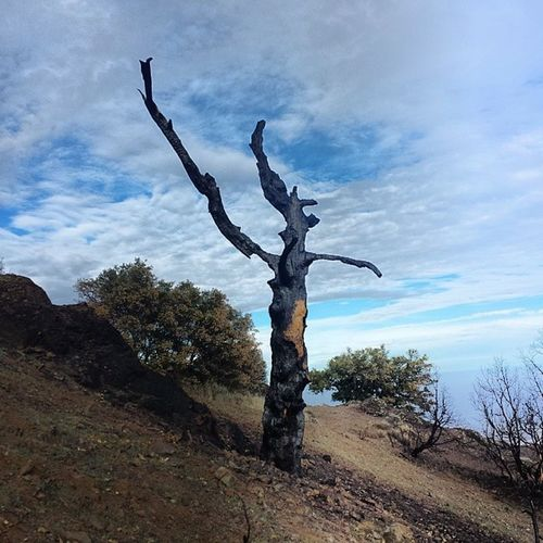 Remains of the fire... MtDiablo