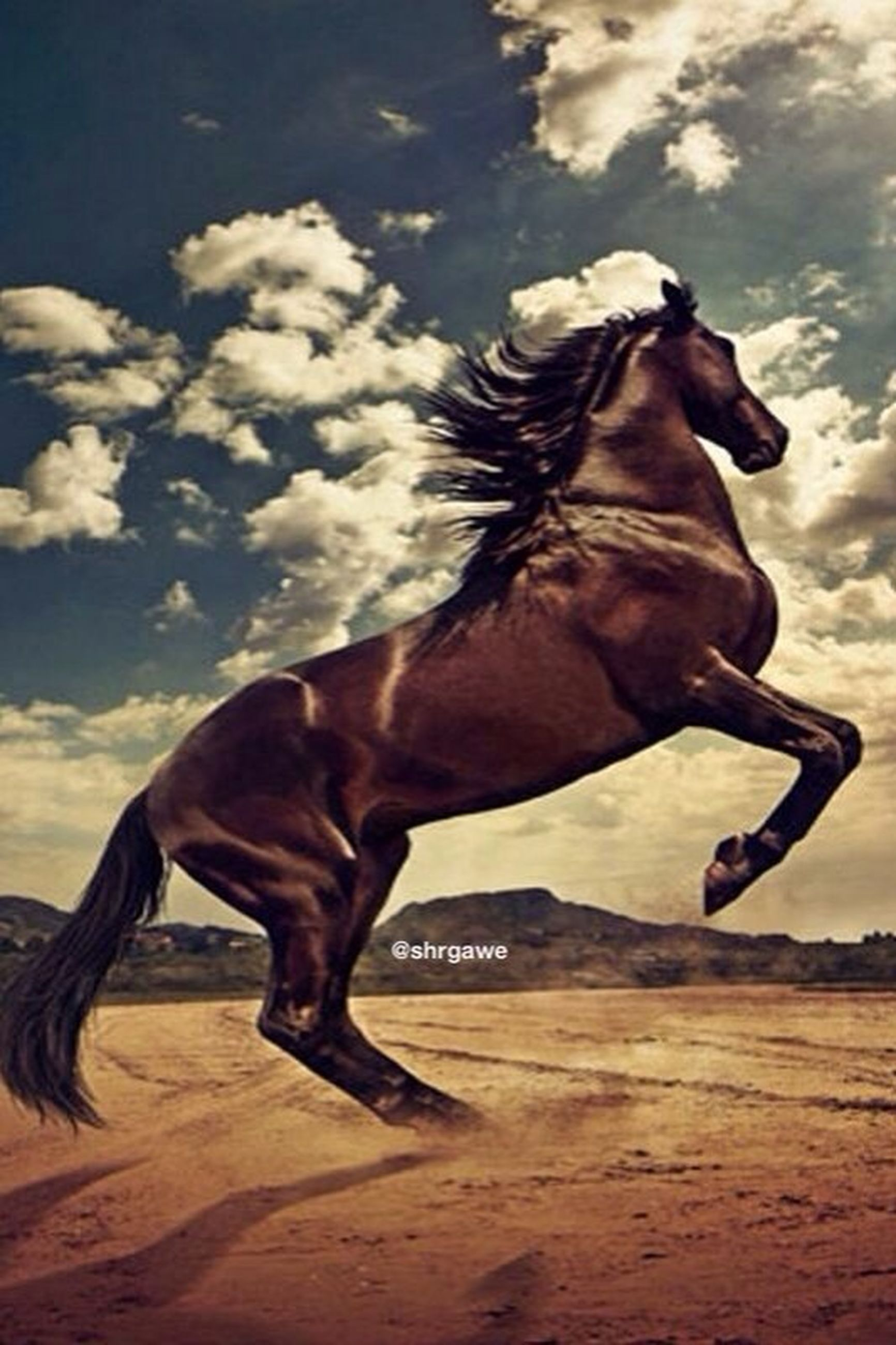 animal themes, horse, one animal, domestic animals, mammal, working animal, livestock, side view, herbivorous, animal head, sky, standing, two animals, sunlight, outdoors, animal, full length, vertebrate, day, zoology