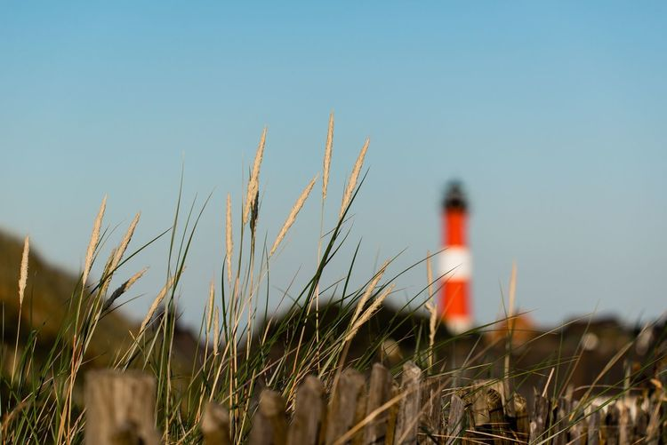 Growth Nature Field Clear Sky Day Outdoors Beauty In Nature Tranquility Grass Sky One Person Close-up People lighthouse