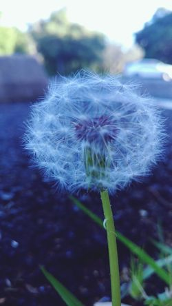 Flower Focus On Foreground Nature Growth Plant Outdoors Fragility Beauty In Nature Day Close-up Seed No People Flower Head Dandelion Seed Freshness
