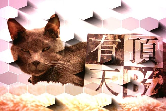Music B'z Cat Chat Gato New Song