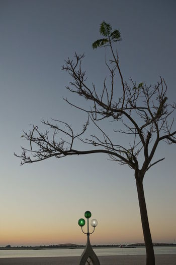 Silhouette tree by sea against clear sky during sunset