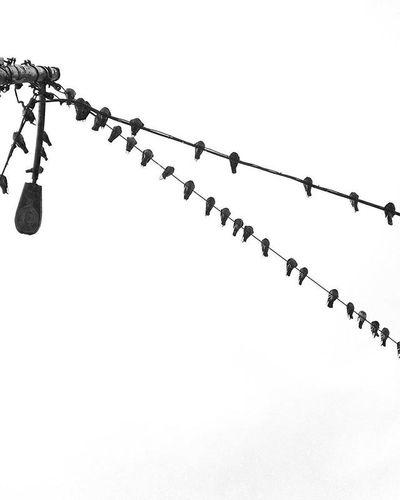 Thebirds RainyDay Raincouver VSCO Vscocam Blackandwhite Telephonewires Createsomething CreateExplore Visualarchitects Negativespace