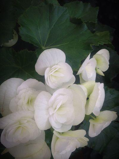 Flower Beauty In Nature White Color Freshness EyeEm Nature Lover