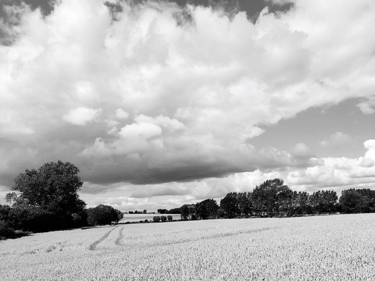 Field Agriculture Sky Cloud - Sky Farm Landscape Tree Rural Scene Nature Tranquility Tranquil Scene Scenics Day Beauty In Nature No People Outdoors Growth Waabs Ostsee