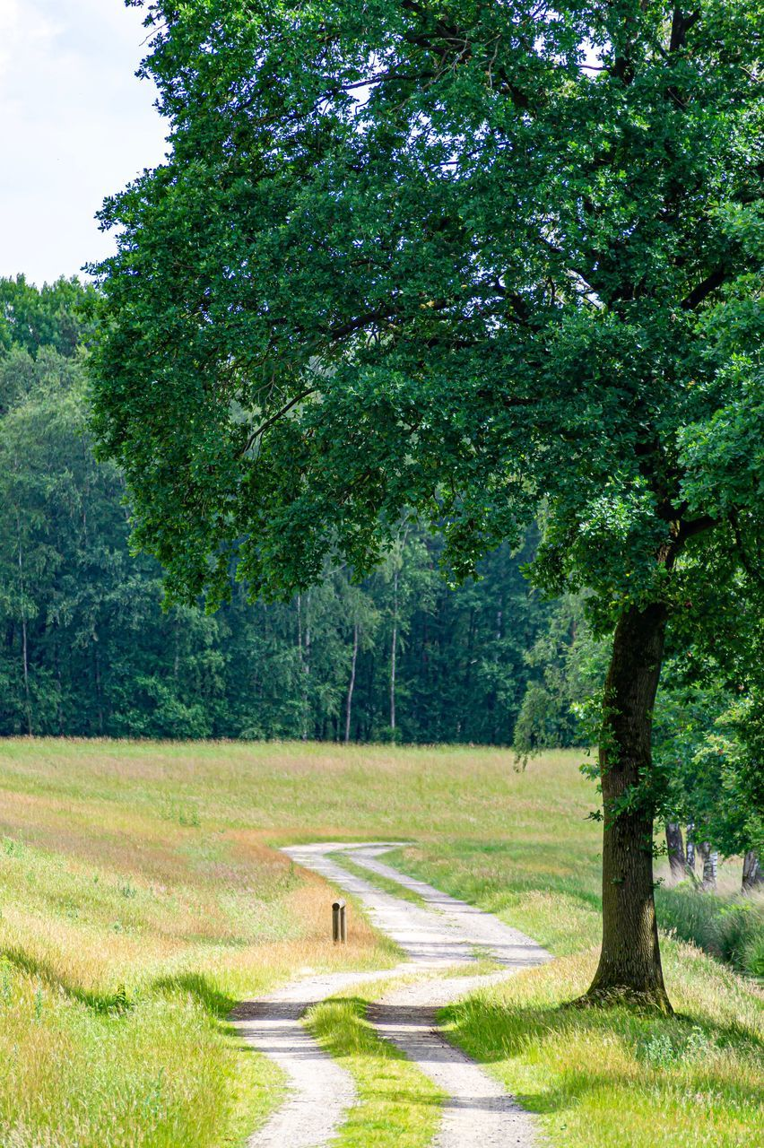 tree, plant, grass, green color, nature, landscape, day, tranquility, land, tranquil scene, beauty in nature, no people, transportation, road, growth, footpath, field, outdoors, scenics - nature, direction