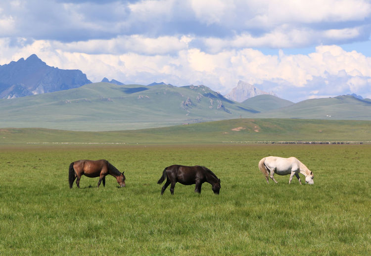 three horses brown, white and black eating grass on the grassland cloudy day Agriculture Animal Animal Themes Animal Wildlife Cloud - Sky Domestic Domestic Animals Environment Field Grass Grazing Group Of Animals Herbivorous Land Landscape Livestock Mammal Mountain Mountain Range Nature No People Sky