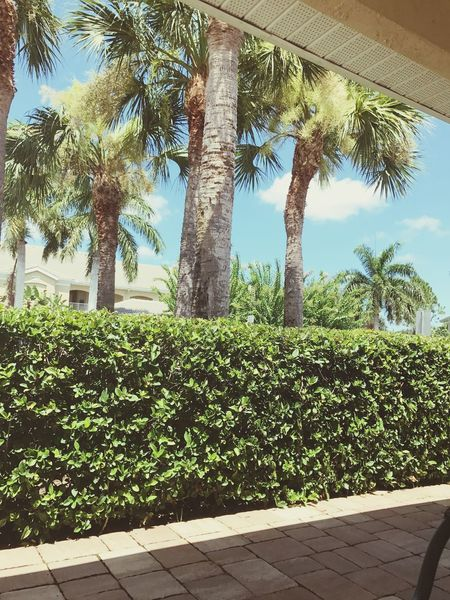 Summa Palmtrees Lifestyle