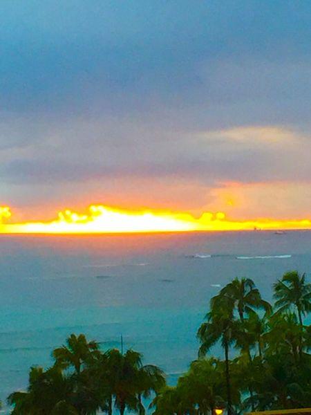 Pacific Ocean Sky Pacific Sky Pacific Ocean View Sunset Cloud - Sky No People Palm Trees Tropics Tropical Island Golden Color Hawaii Green Color Honolulu, Hawaii Waikiki Beach Second Acts Island Of Oahu, Hawaii Tropical Island Tropical Island Sunset Perspectives On Nature Oahu / Hawaii An Eye For Travel