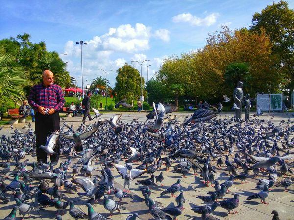 Pigeons Guvercinler Merhamet Gezgin Yalovasahili Take Photos Walking Around Oan_turkey Benimkadrajim Benimgözümden