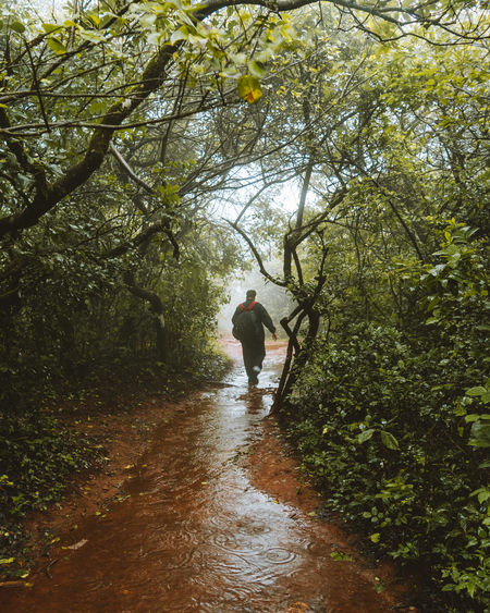 woods Fresh On Eyeem  Fresh On Market 2018 Tree Water Full Length Branch Men Sky Monsoon Rainy Season Weather Foggy Woods Hiker Rainfall Drop RainDrop