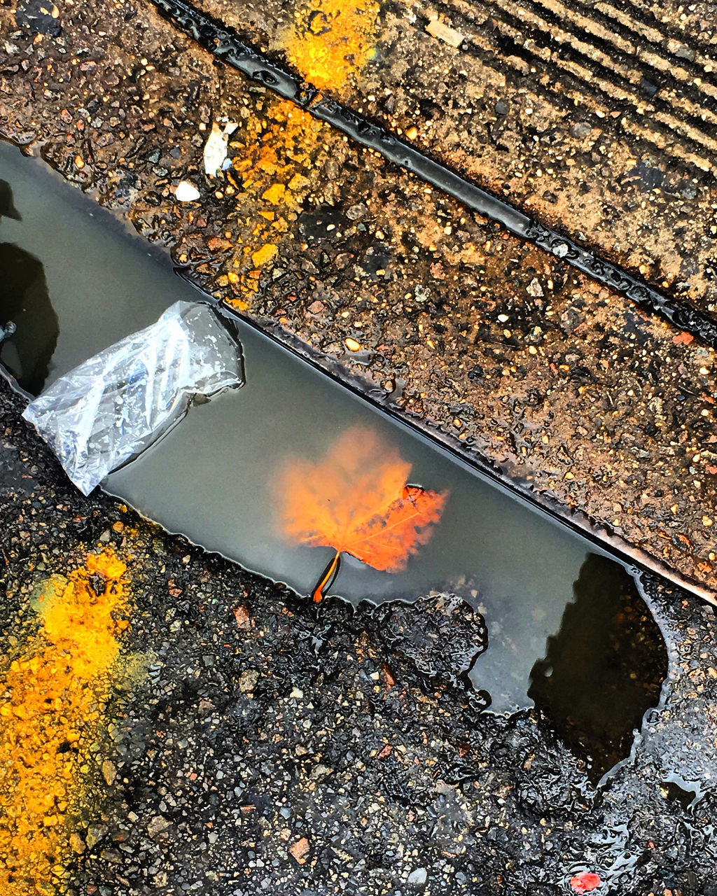 REFLECTION OF TREES IN PUDDLE