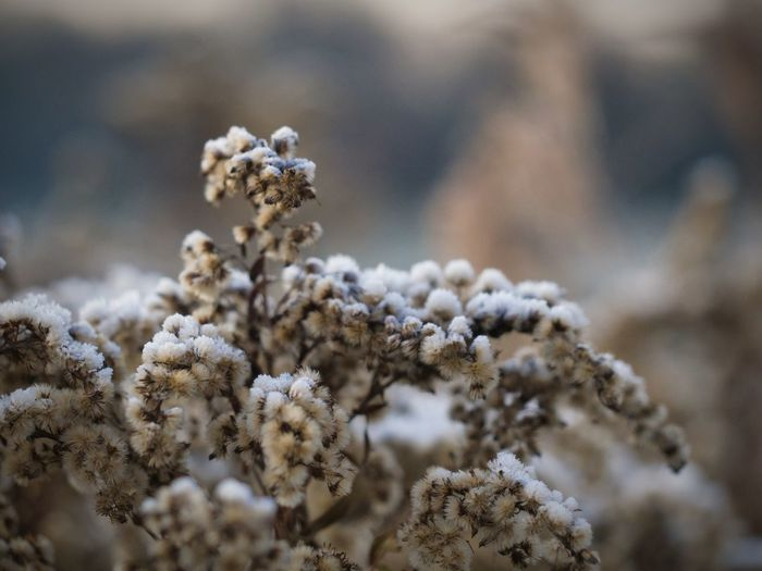 Plants on a winter morning