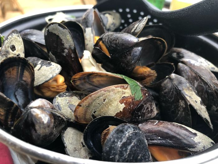 Muscheln im Restaurant in Renesse Seafood Food Food And Drink Freshness Animal Close-up Shell Animal Shell Mussel Still Life Raw Food