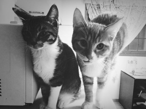 Lovely Cats Cats Of EyeEm Pet Portrait I Love My Cat Baby Lovable Cute Pets So Cute