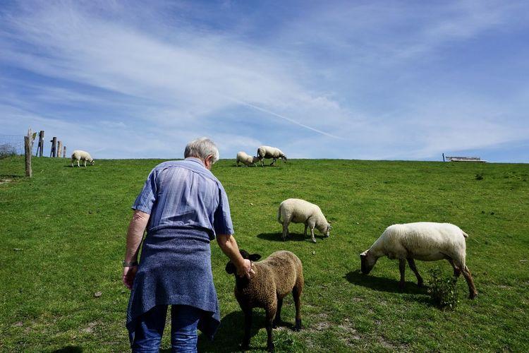 Rear view of men grazing on field against sky