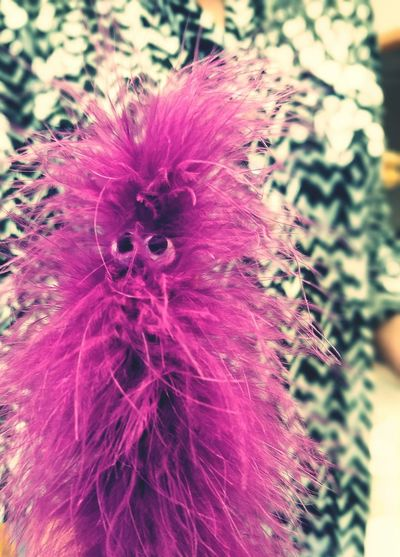 Muppet wand. Cat Toy Muppets Purple Feather  MyPhotography Beauty In Ordinary Things Tucson Az Eyeofthebeholder Photography Mycat Indoors  Officespace