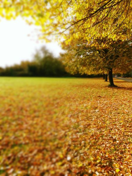 Tree Nature No People Beauty In Nature Autumn Edit Junkie Changing Colors Autumn Colors Nature On Your Doorstep Nature Yellow Gold Colored