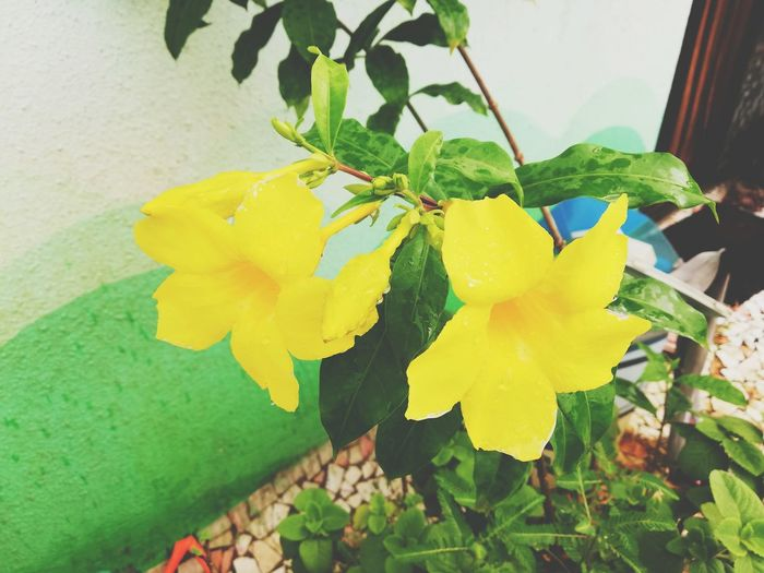 Terrace gardening Flower Head Prickly Pear Cactus Flower Leaf Yellow Multi Colored Close-up Plant Green Color