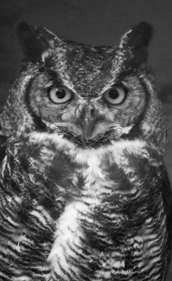 Animal Themes Animals In The Wild Bird Bird Of Prey Close-up Day Nature No People One Animal Outdoors Owl