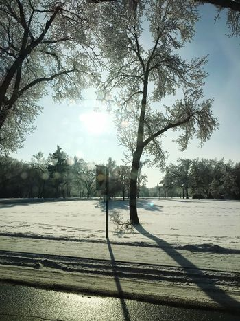 Winter Wonderland has been the best day of the year Snow Snow Winter Landscape Wintertime Winter Wonderland Winter Tree Plant Sky Nature Day Sunlight No People Land Outdoors Shadow Beauty In Nature Field Branch Landscape Scenics - Nature Tranquility Tranquil Scene Growth