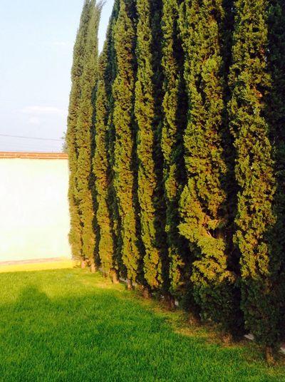 🌲 Nature Trees First Eyeem Photo