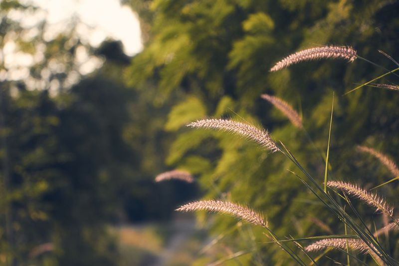 EyeEm Selects Nature Growth Plant Outdoors Day Freshness Grass Evening Rural Scene Countryside