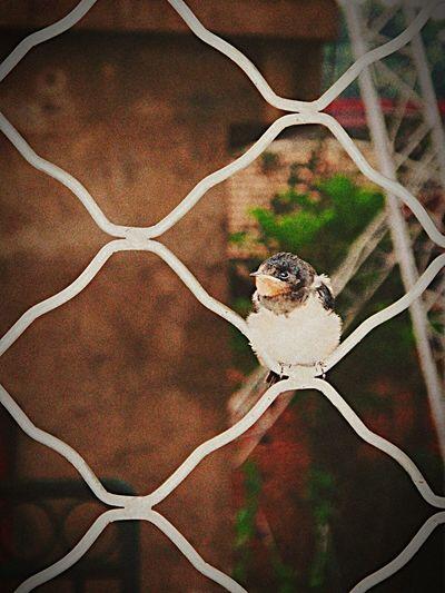 Hello World First Eyeem Photo By Lemonni