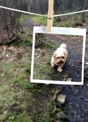 Dog Hundefotografie Hundeportrait Hund Hundi Grün Blätter Zweige Nature Photography Waldspaziergang Forrest Nature Hanging Nature Domestic Animals Close-up Mammal No People