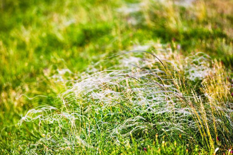 Full frame shot of fresh plants on field