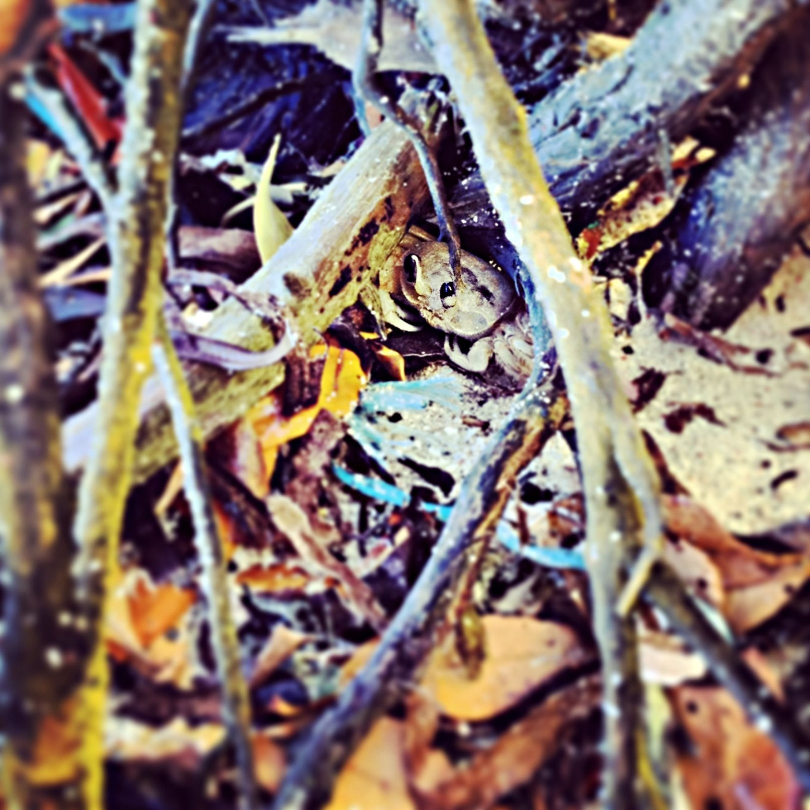 dry, leaf, close-up, selective focus, nature, autumn, change, twig, high angle view, day, outdoors, forest, growth, field, fallen, leaves, no people, focus on foreground, plant, aging process