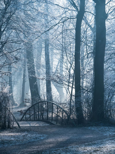 Beauty In Nature Branch Bridge Day Fog Forest Landscape Nature No People Outdoors Scenics Tranquility Tree Tree Trunk Winter