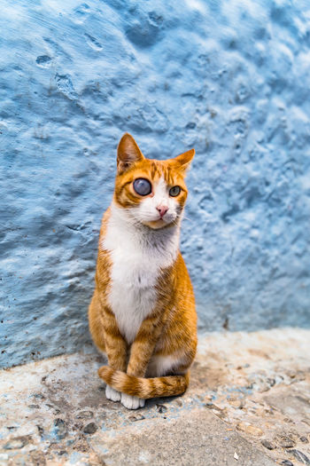 Portrait of cat sitting by wall