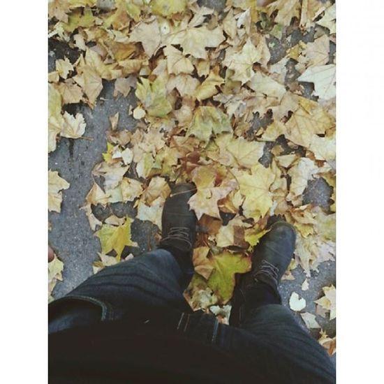 Autumn Faded Colours YellowLeaf Fall Niceweather Seasonofyellow Mik ősz Sárgákmindenhol