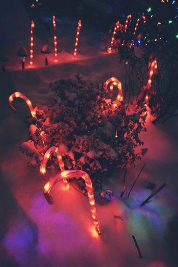 High angle view of illuminated christmas tree at night