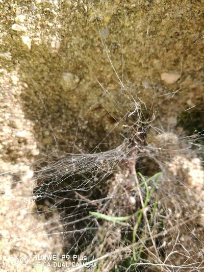 Nature Outdoors Beauty In Nature No People Spider Day Lagoomodeo First Eyeem Photo Sardinialove