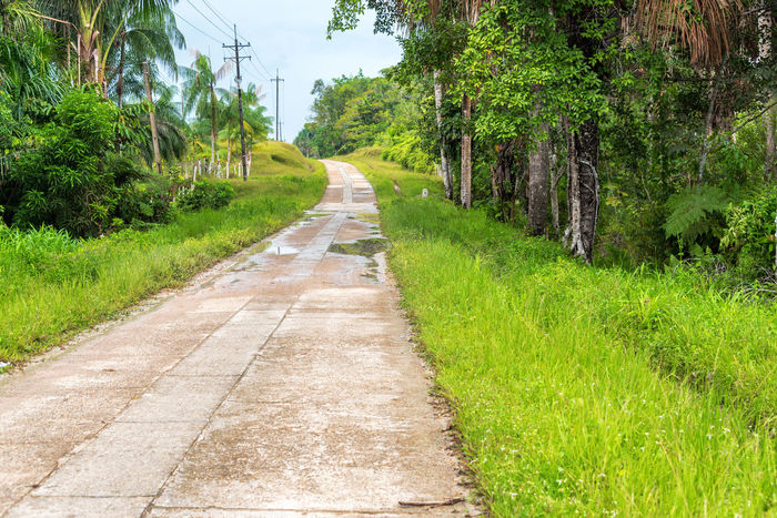 Highway running through the Amazon rain forest near Leticia, Colombia Amazon Amazonas Amazonia Colombia Day Foliage Forest Grass Growth Highway Jungle Landscape Leticia Nature No People Outdoors Rain Forest Rainforest Road South America Street Travel Tree