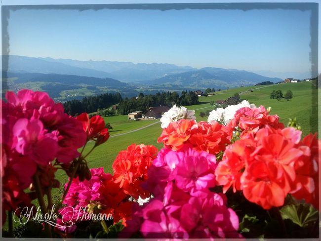 Home, sweet home :) Home Sweet Home Nature_collection Flower Collection Landscape_Collection