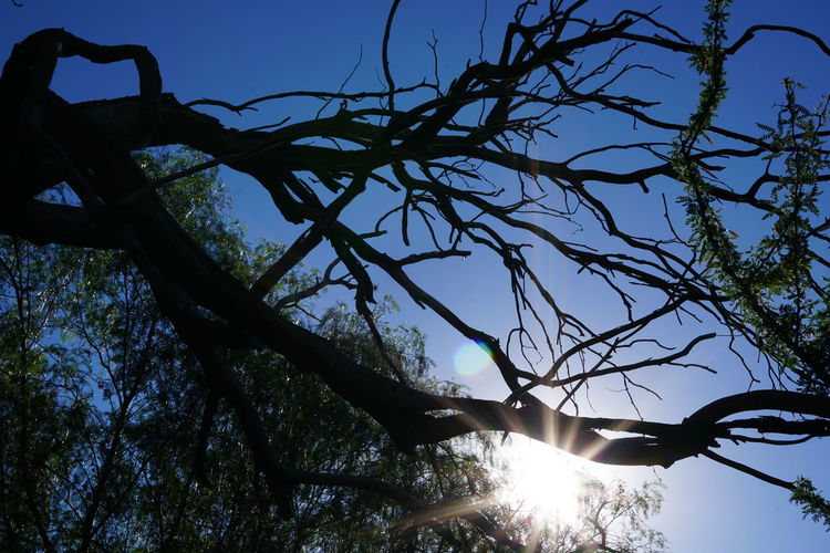 El sol entra las ramas de un árbol en la ciudad de Luján, San Luis, Argentina. Bare Tree Beauty In Nature Branch Clear Sky Close-up Day Low Angle View Nature No People Outdoors Scenics Sky Sunlight Tree