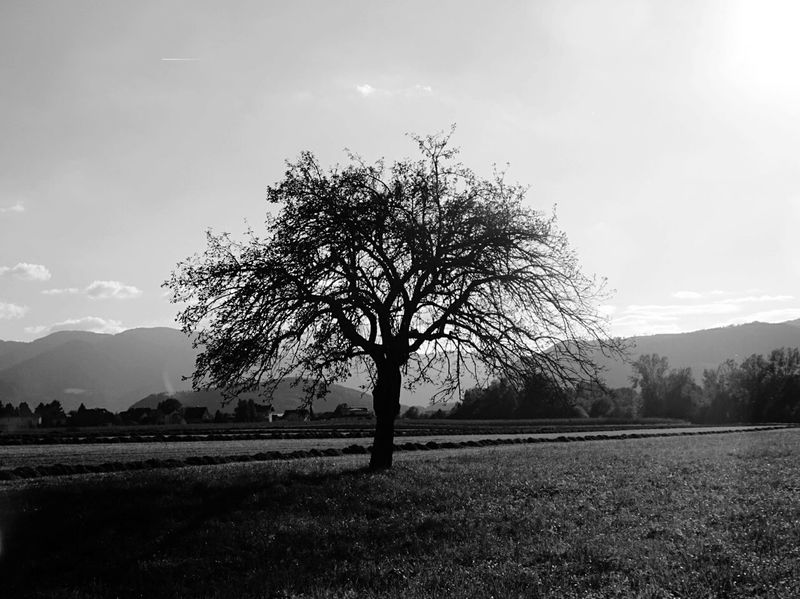 Black And White Tree Photography Lonely Tree Autumn EyeEm Nature Lover Going For A Run My Running View Austrianphotographers Black And White Photography Fall Beauty Black & White Friday