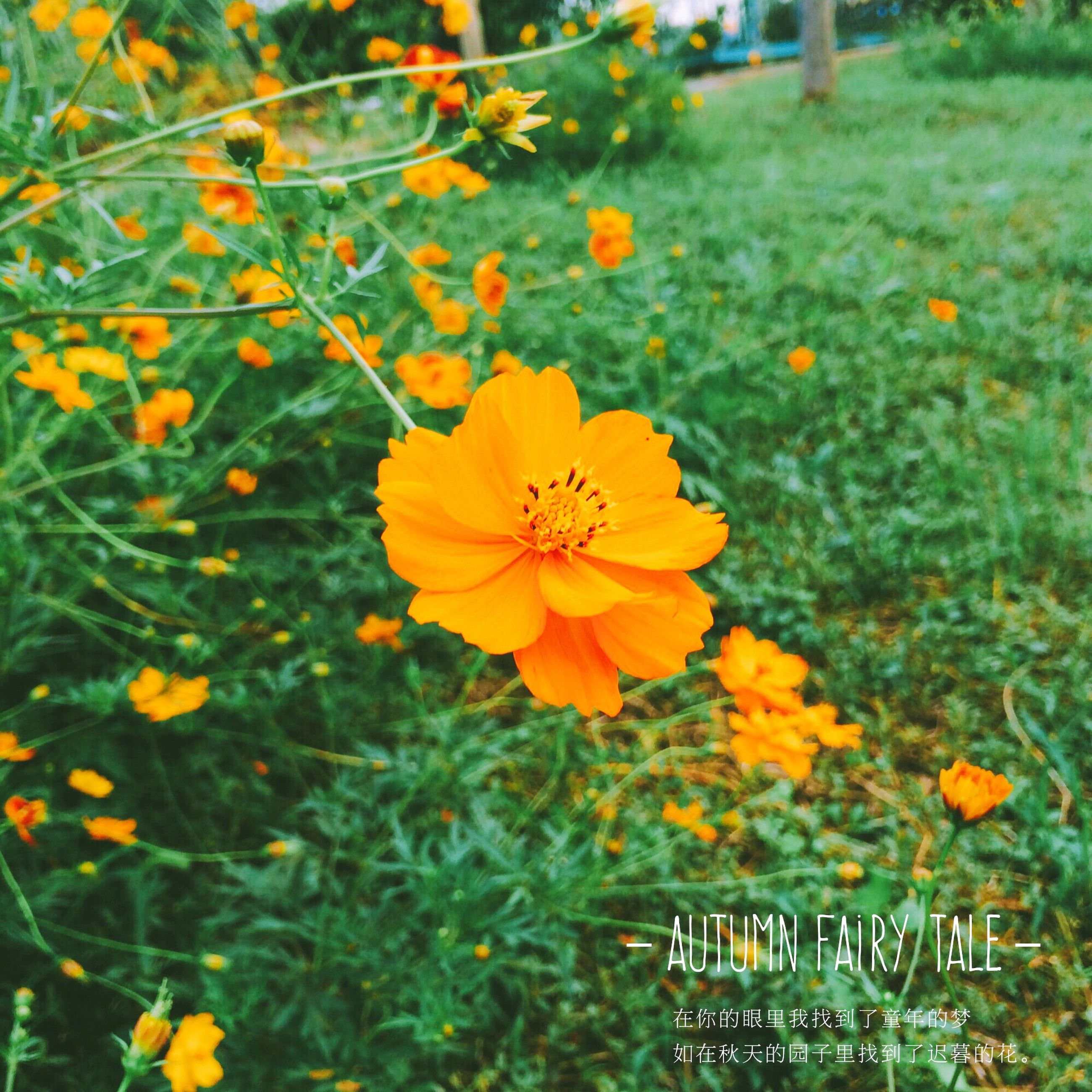 flower, freshness, petal, fragility, flower head, growth, beauty in nature, yellow, close-up, focus on foreground, springtime, nature, in bloom, plant, orange color, blossom, blooming, vibrant color, day, outdoors, botany, green color, yellow color, scenics, no people, pollen